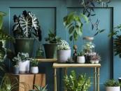 KRISPOL radzi: zadbaj o rośliny w swoim domu zdj. 1