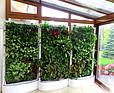 Zielona ściana w domu prywatnym w Rybniku
